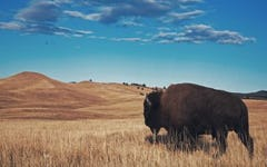 Bison vs Beef – Which Red Meat Reigns Supreme?