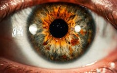 Lutein and Zeaxanthin for Eye Health and Performance